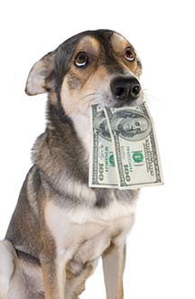 dog-with-cash-web.jpg